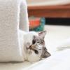 かわいすぎて癒される♡Instagramで大人気の猫アカウント5つ