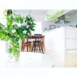 植物を白のインテリアとコーディネートするアイディア20選♡生活に潤いを