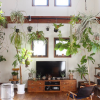 グリーンでお部屋を癒しの空間に♪植物を取り入れたインテリアの実例をお部屋のシーン別にご紹介します。