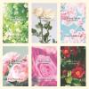 新ブランドFlora Notis JILL STUARTが誕生♡~花に秘められた生命力と香り~