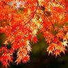 【鎌倉】秋の紅葉スポット穴場をご紹介☆2018秋