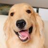 【東京】犬好きの方必見!都内で可愛いワンちゃんと触れ合える犬カフェ6選