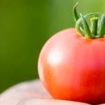 疲労回復や美容にも効果がある!?抜群の栄養素を持つトマトで健康的な体を作ろう