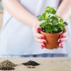 インテリアや空気清浄などなど♪観葉植物が私たちに与えてくれるメリットとは?