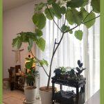 【100均】グリーンでお部屋を飾ろう♡ダイソーのおススメの観葉植物☆