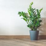 「観葉植物」のおすすめ人気ランキング10選|1LDKのリビングにぴったりな大きさをピックアップ♪